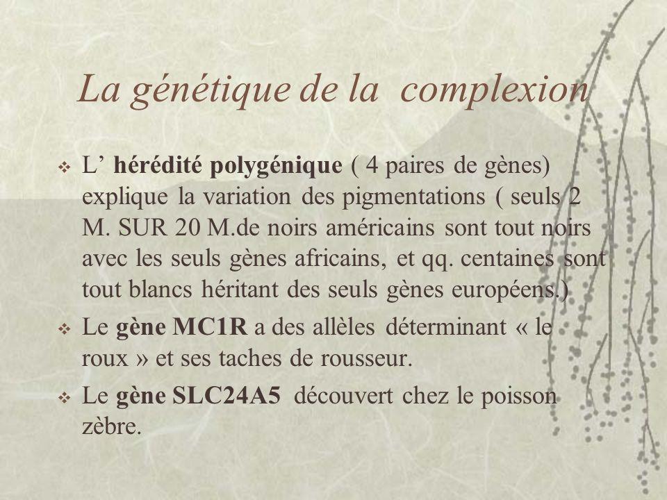 La génétique de la complexion L hérédité polygénique ( 4 paires de gènes) explique la variation des pigmentations ( seuls 2 M. SUR 20 M.de noirs améri