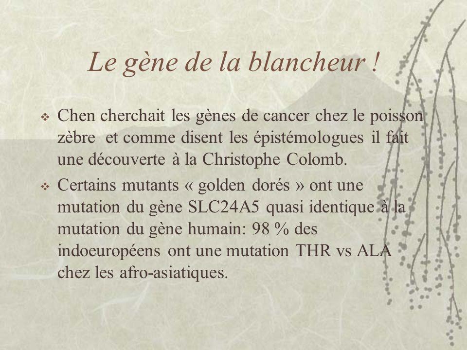 Le gène de la blancheur ! Chen cherchait les gènes de cancer chez le poisson zèbre et comme disent les épistémologues il fait une découverte à la Chri