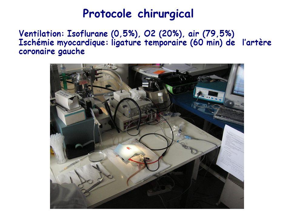 Protocole chirurgical Ventilation: Isoflurane (0,5%), O2 (20%), air (79,5%) Ischémie myocardique: ligature temporaire (60 min) de lartère coronaire ga
