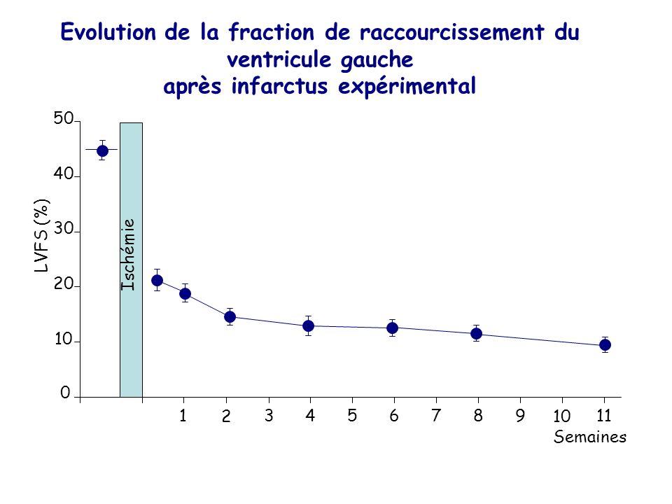 Evolution de la fraction de raccourcissement du ventricule gauche après infarctus expérimental Semaines 0 134567 LVFS (%) Ischémie 10 20 30 40 50 2 9