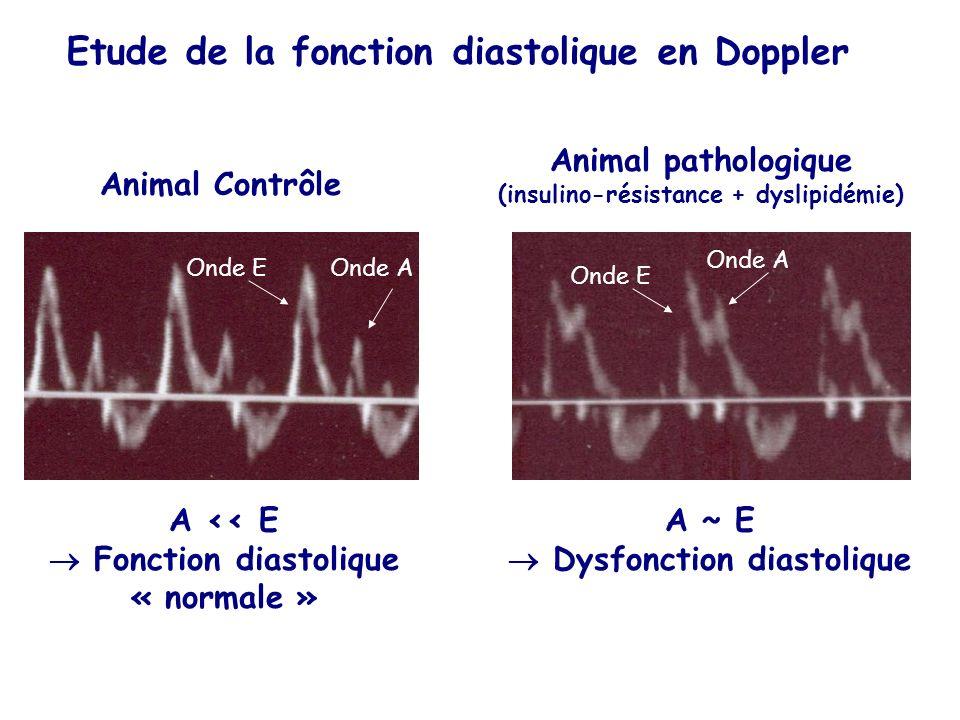Etude de la fonction diastolique en Doppler Onde EOnde A Onde E Onde A Animal Contrôle Animal pathologique (insulino-résistance + dyslipidémie) A << E