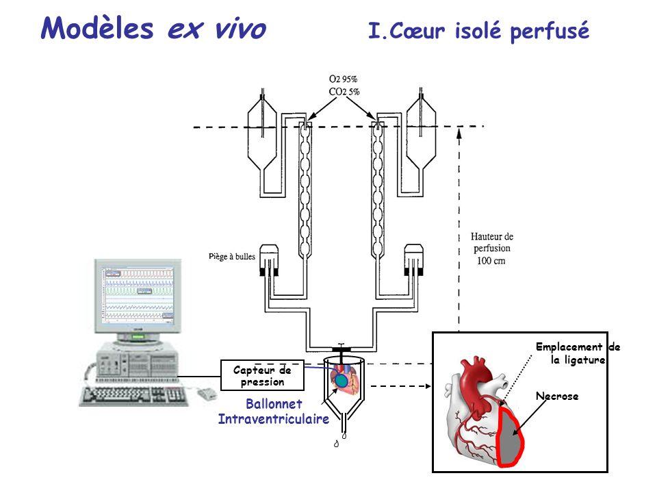 Emplacement de la ligature Necrose Ballonnet Intraventriculaire Capteur de pression Modèles ex vivo I.Cœur isolé perfusé