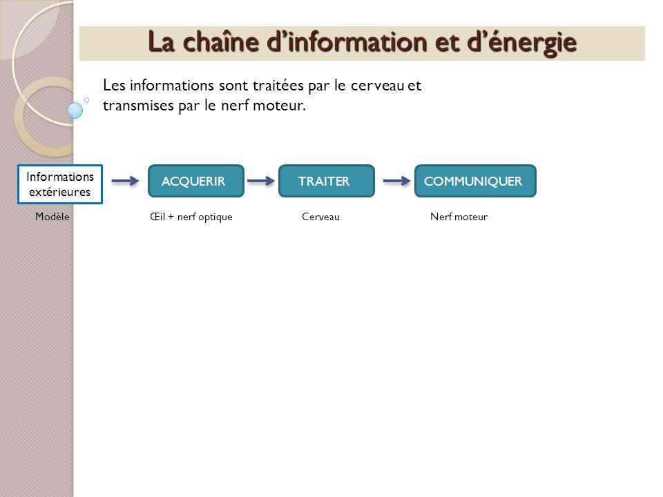 La chaîne dinformation et dénergie Les informations sont traitées par le cerveau et transmises par le nerf moteur. Informations extérieures ACQUERIRTR