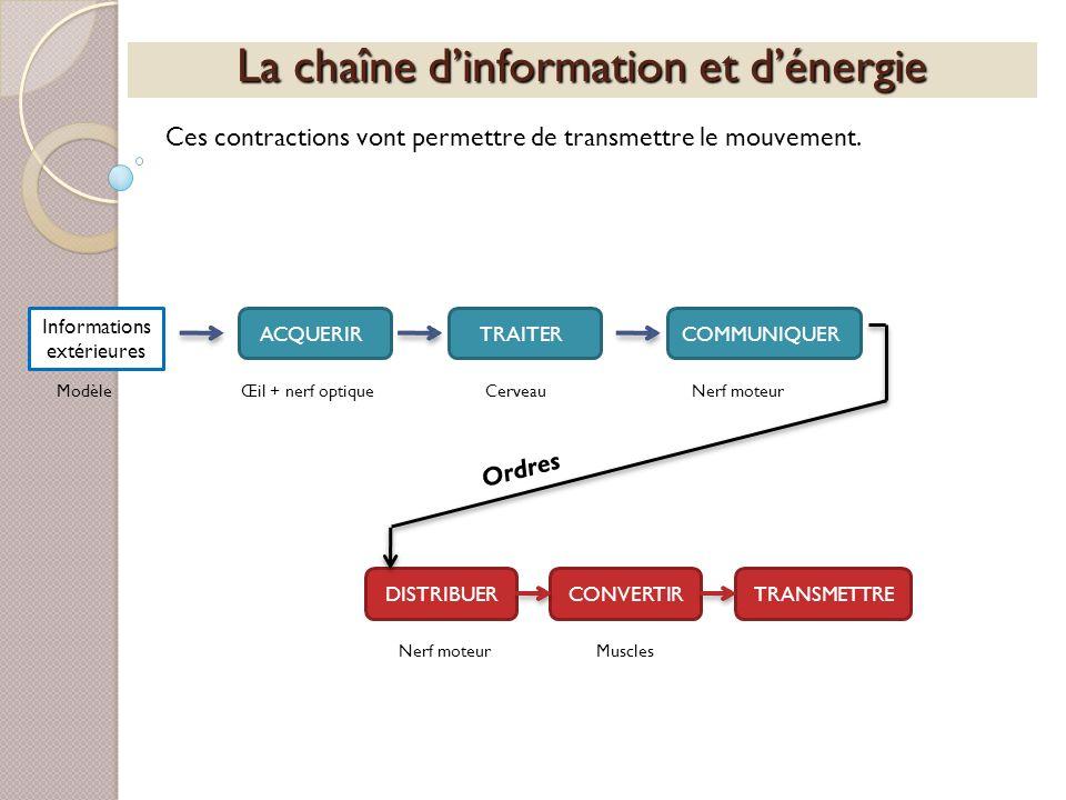 La chaîne dinformation et dénergie Ces contractions vont permettre de transmettre le mouvement. Informations extérieures ACQUERIRTRAITERCOMMUNIQUERDIS