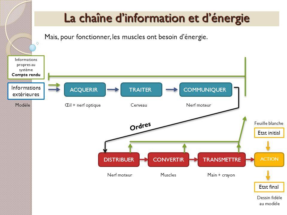 La chaîne dinformation et dénergie Mais, pour fonctionner, les muscles ont besoin dénergie. Informations extérieures ACQUERIRTRAITERCOMMUNIQUERDISTRIB