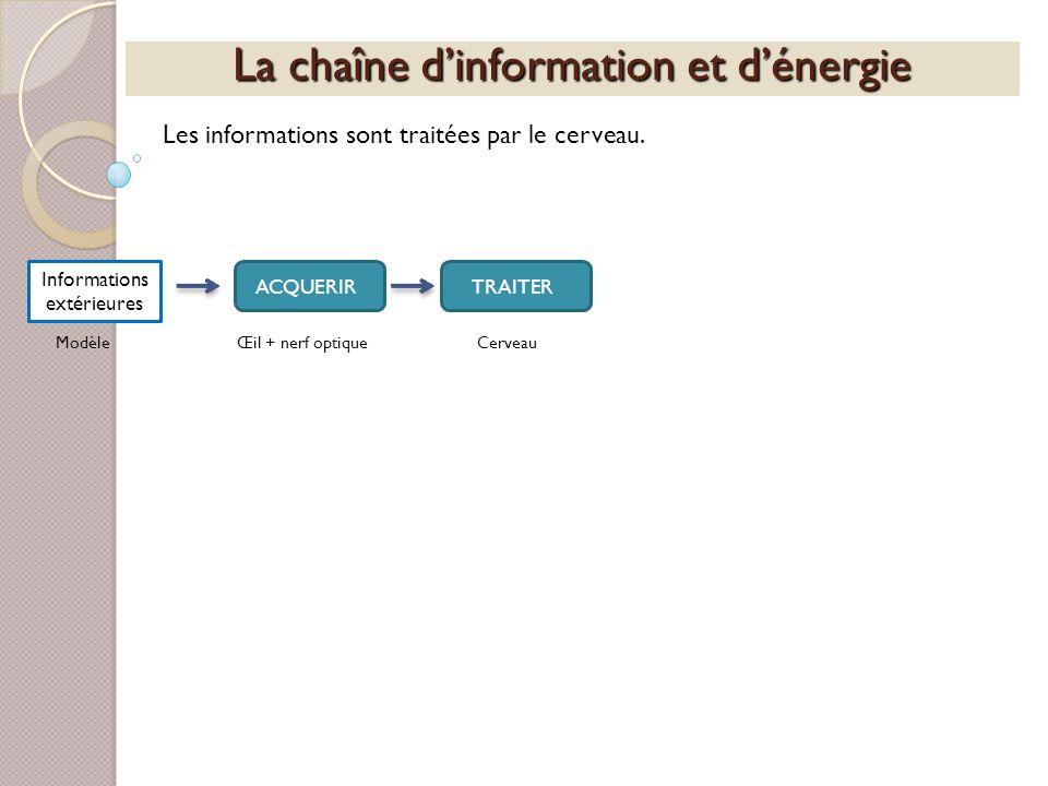 La chaîne dinformation et dénergie Les informations sont traitées par le cerveau. Informations extérieures ACQUERIRTRAITER ModèleŒil + nerf optiqueCer