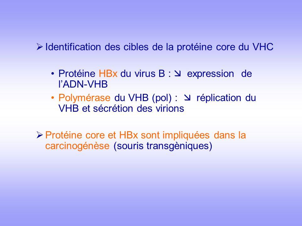 Identification des cibles de la protéine core du VHC Protéine HBx du virus B : expression de lADN-VHB Polymérase du VHB (pol) : réplication du VHB et sécrétion des virions Protéine core et HBx sont impliquées dans la carcinogénèse (souris transgèniques)