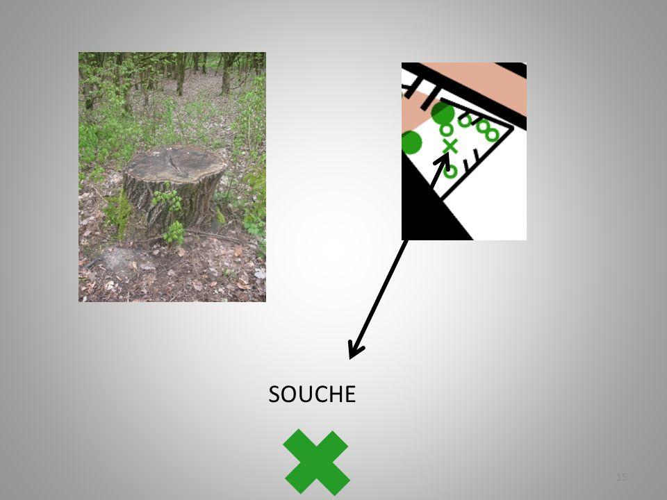 SOUCHE 15