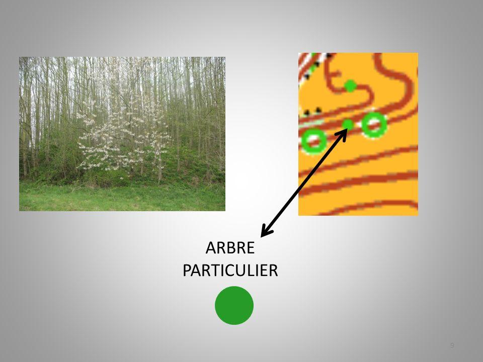 ARBRE PARTICULIER 9