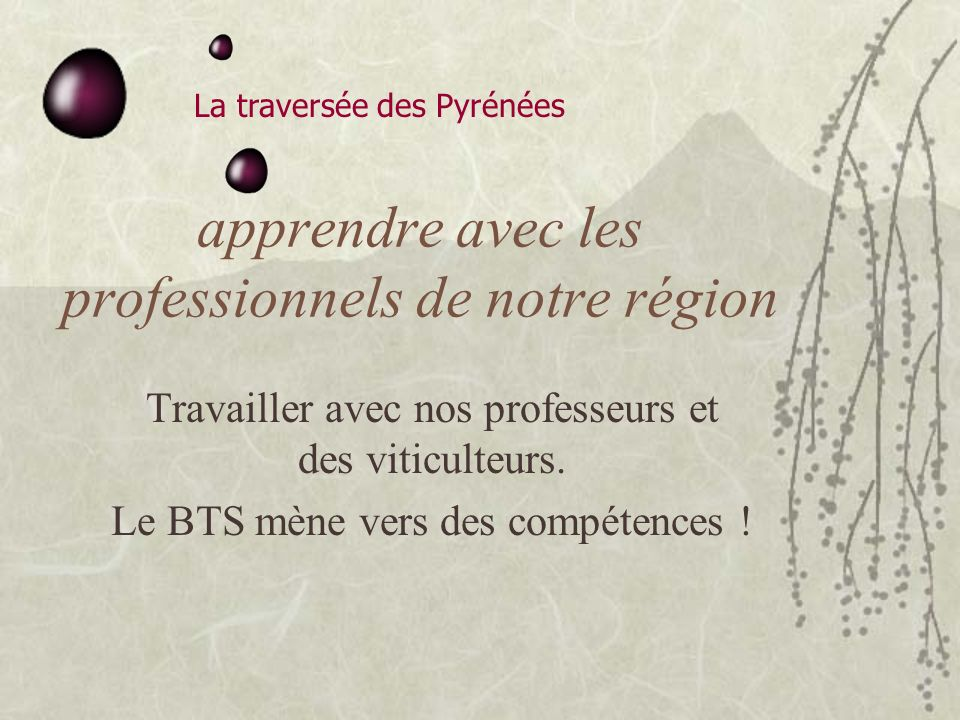 apprendre avec les professionnels de notre région Travailler avec nos professeurs et des viticulteurs.