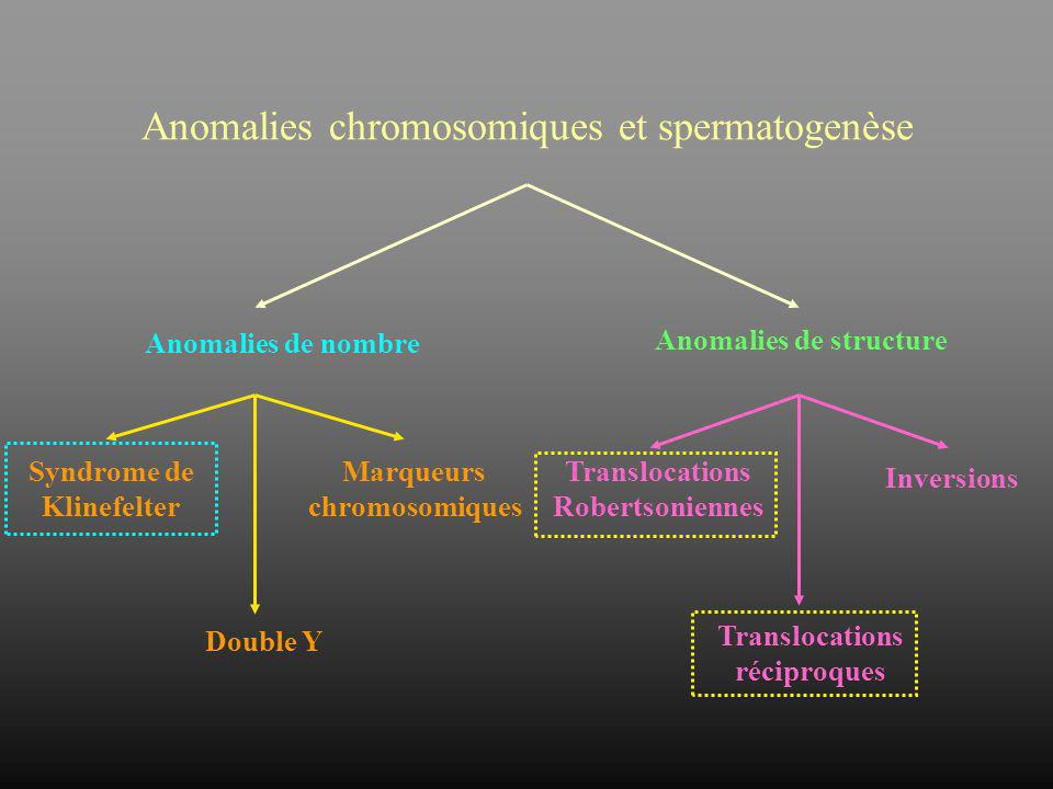 CARYOTYPE NORMAL CARYOTYPE TRANSLOQUE EQUILIBRE SEGREGATION ALTERNE TRISOMIE ROUGE MONOSOMIE VERT TRISOMIE VERT MONOSOMIE ROUGE SEGREGATION ADJACENTE I Modes de ségrégation dun remaniement chromosomique parental