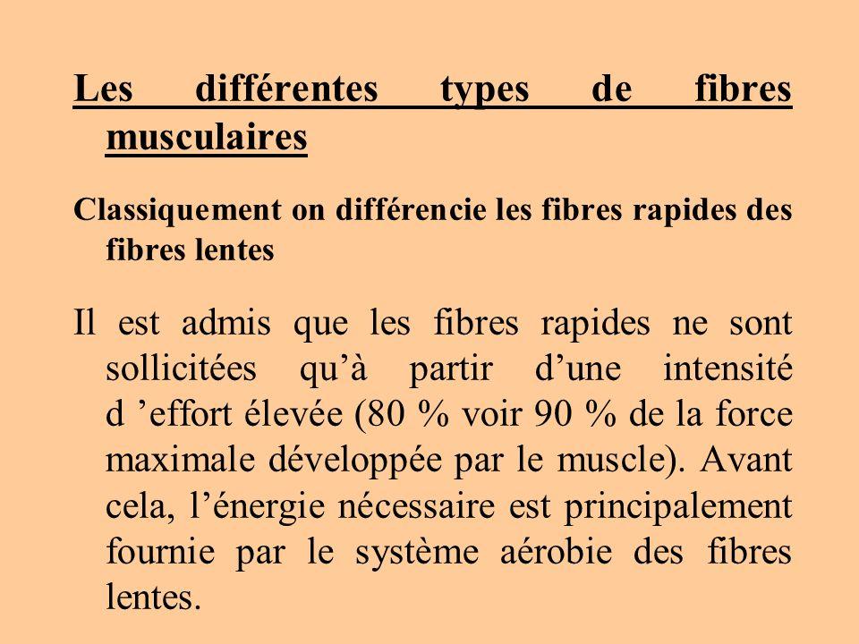 Les différentes types de fibres musculaires Classiquement on différencie les fibres rapides des fibres lentes Il est admis que les fibres rapides ne s