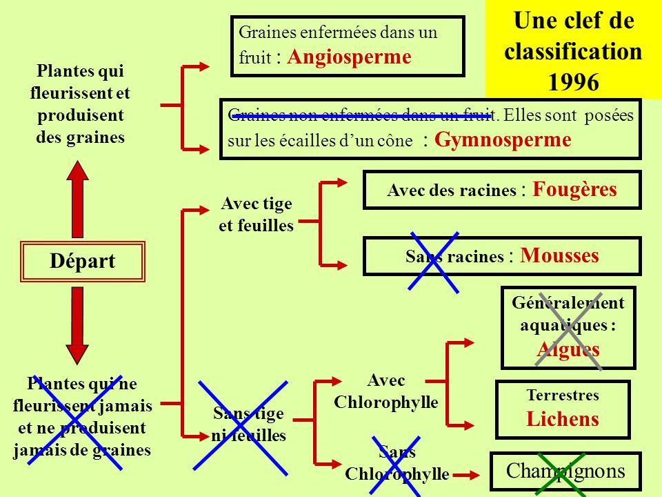Une clef de classification 1996 Départ Plantes qui ne fleurissent jamais et ne produisent jamais de graines Plantes qui fleurissent et produisent des