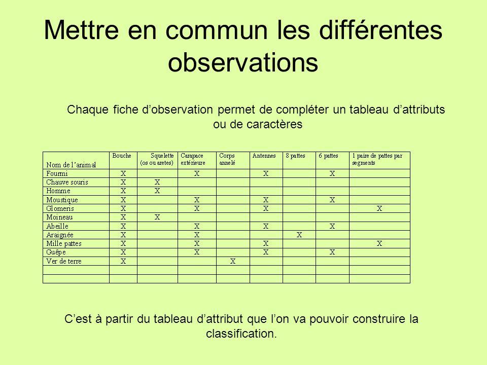 Mettre en commun les différentes observations Chaque fiche dobservation permet de compléter un tableau dattributs ou de caractères Cest à partir du ta