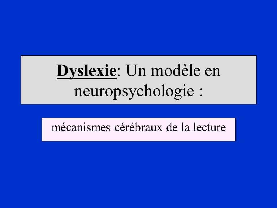 Dyslexie: Un modèle en neuropsychologie : mécanismes cérébraux de la lecture