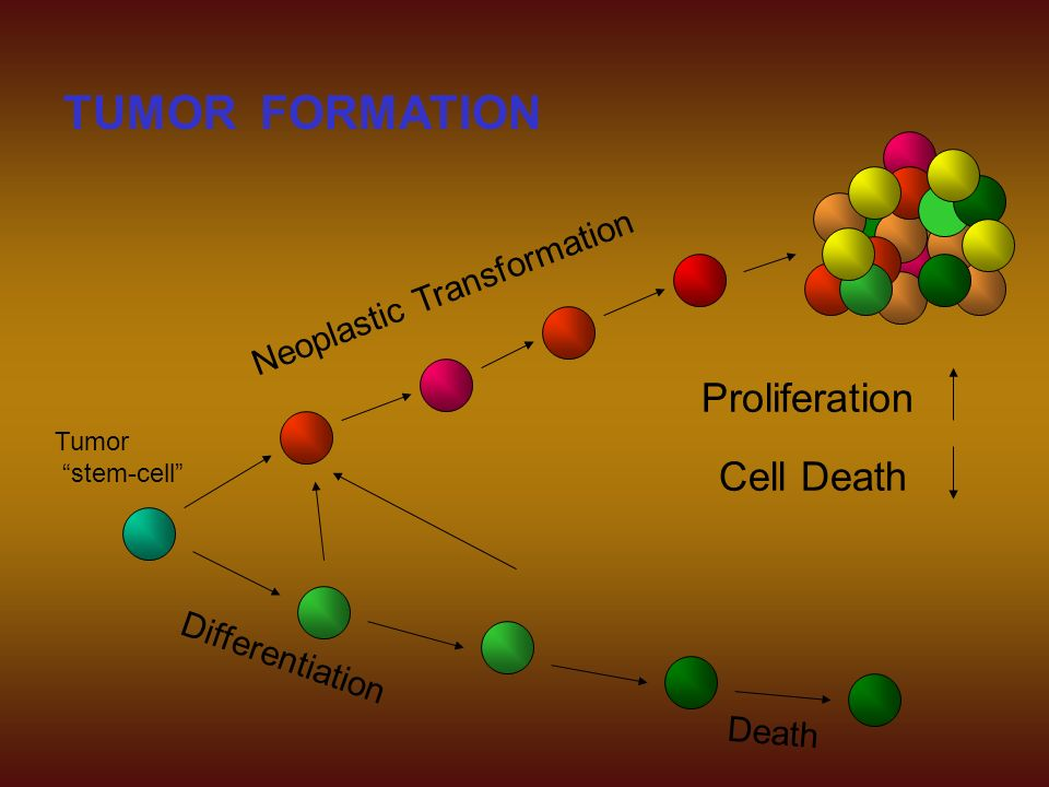Tumor stem-cell TUMOR FORMATION Differentiation Death Neoplastic Transformation Proliferation Cell Death