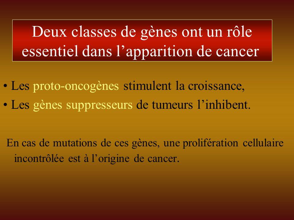Deux classes de gènes ont un rôle essentiel dans lapparition de cancer Les proto-oncogènes stimulent la croissance, Les gènes suppresseurs de tumeurs