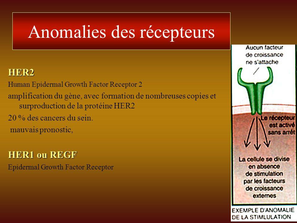 Anomalies des récepteurs HER2 Human Epidermal Growth Factor Receptor 2 amplification du gène, avec formation de nombreuses copies et surproduction de