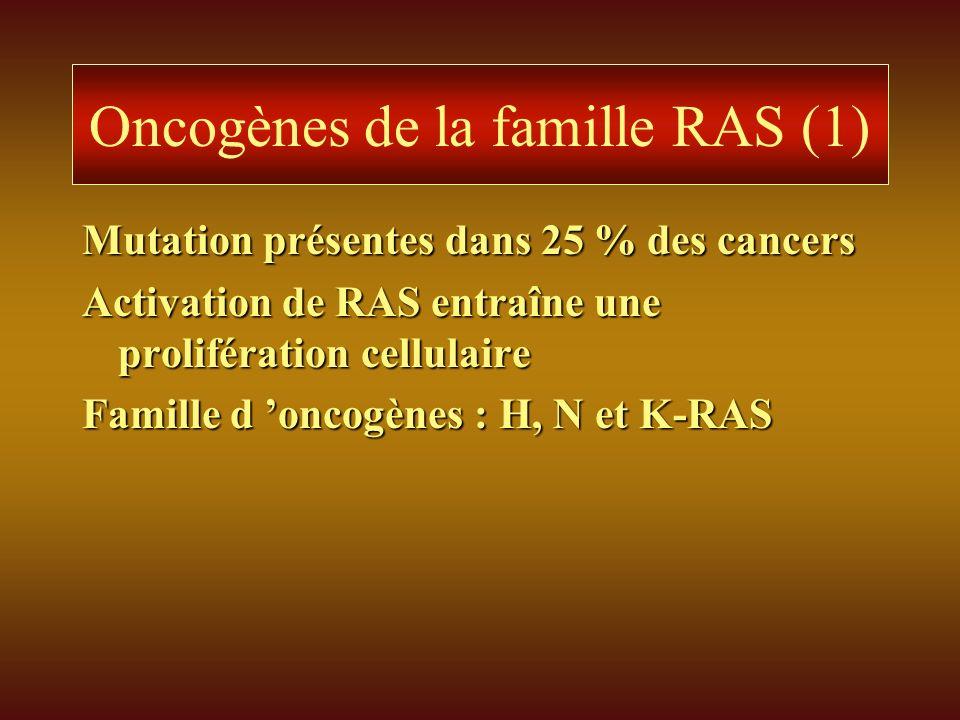 Oncogènes de la famille RAS (1) Mutation présentes dans 25 % des cancers Activation de RAS entraîne une prolifération cellulaire Famille d oncogènes :
