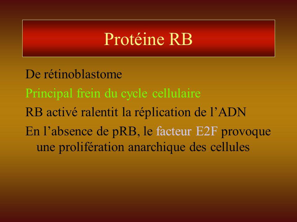 Protéine RB De rétinoblastome Principal frein du cycle cellulaire RB activé ralentit la réplication de lADN En labsence de pRB, le facteur E2F provoqu