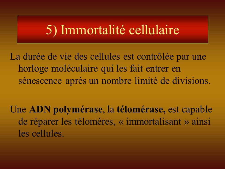 5) Immortalité cellulaire La durée de vie des cellules est contrôlée par une horloge moléculaire qui les fait entrer en sénescence après un nombre lim
