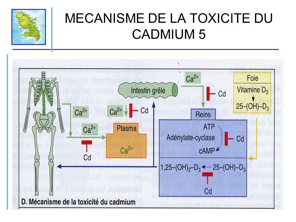 MECANISME DE LA TOXICITE DU CADMIUM 5