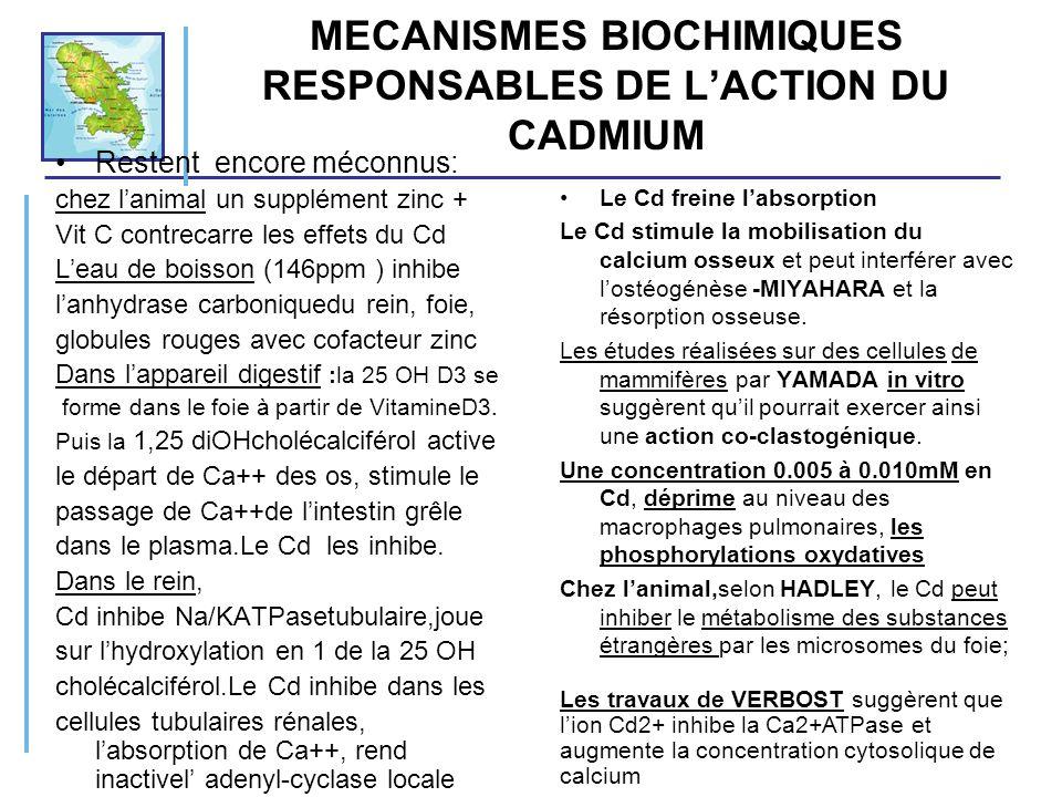 MECANISMES BIOCHIMIQUES RESPONSABLES DE LACTION DU CADMIUM Restent encore méconnus: chez lanimal un supplément zinc + Vit C contrecarre les effets du