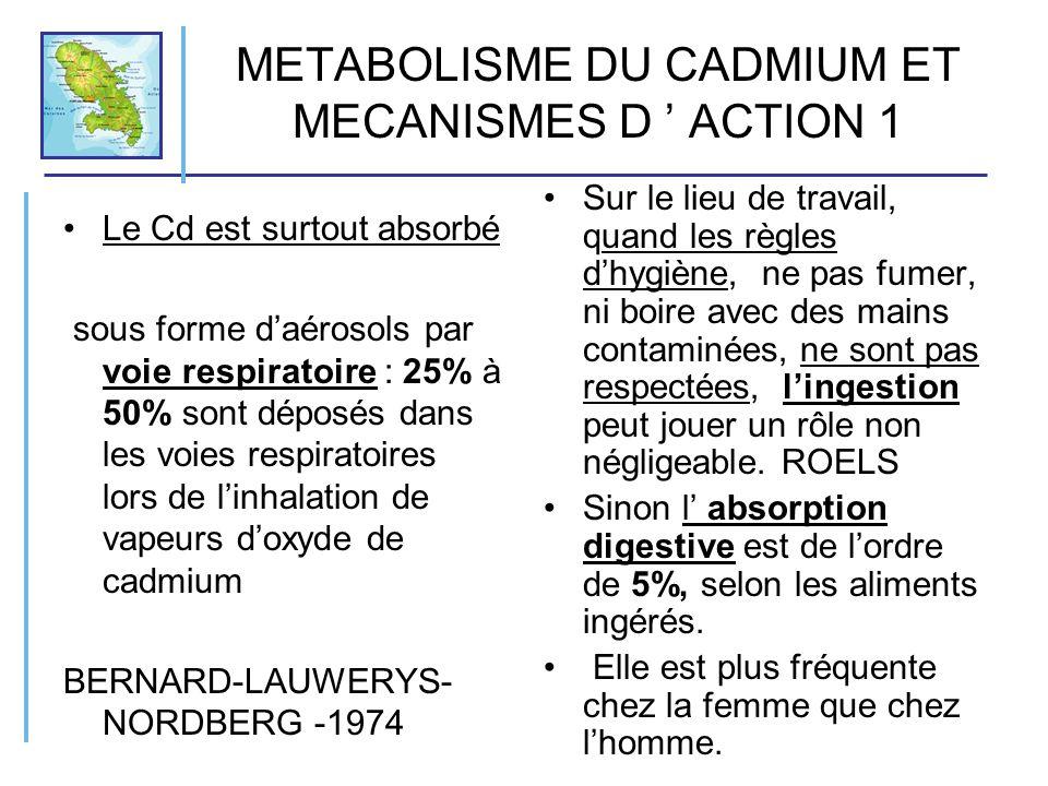 METABOLISME ET MECANISMES DACTION 2 Dautres facteurs influencent labsorption intestinale du Cadmium: Lâge, le sexe Le tabagisme Les déficiences en fer et en calcium augmentent labsorption du Cd FOX- KOWAL