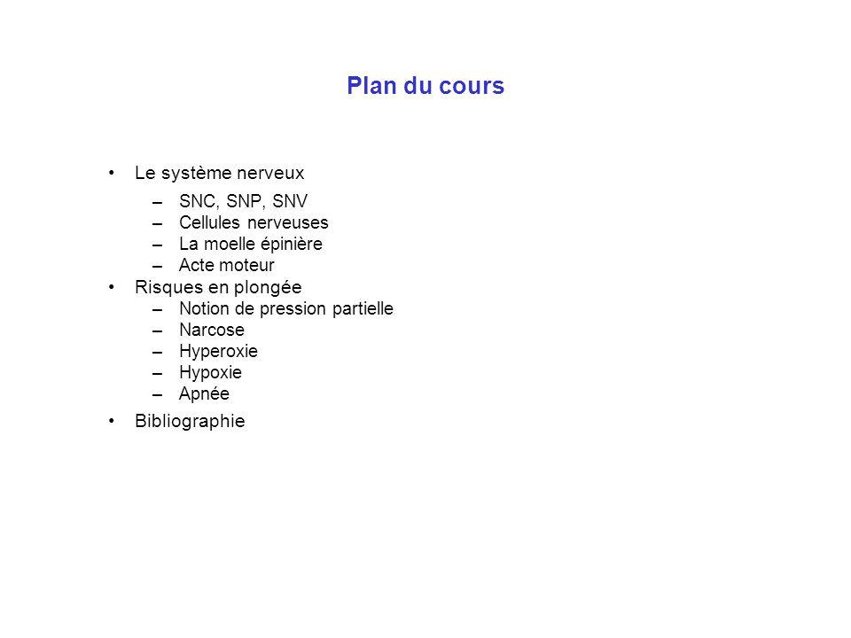 Plan du cours Le système nerveux –SNC, SNP, SNV –Cellules nerveuses –La moelle épinière –Acte moteur Risques en plongée –Notion de pression partielle