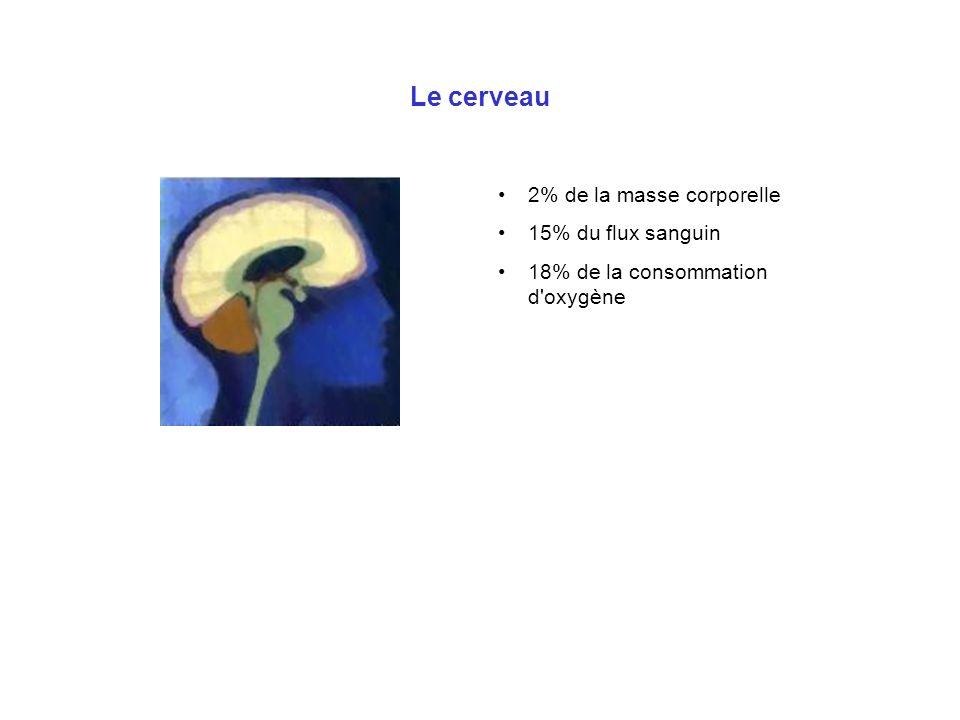 Le cerveau 2% de la masse corporelle 15% du flux sanguin 18% de la consommation d'oxygène