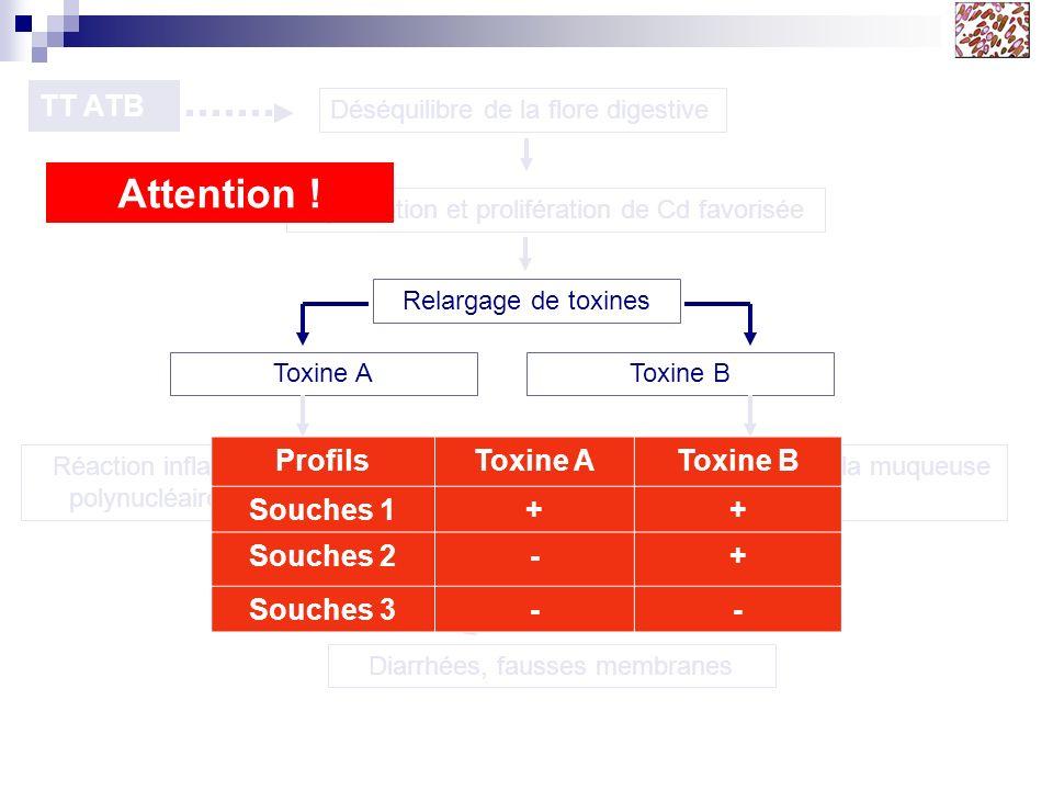 TT ATB Déséquilibre de la flore digestive Implantation et prolifération de Cd favorisée Relargage de toxines Toxine AToxine B Réaction inflammatoire (