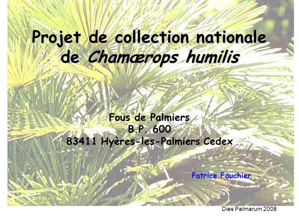 Dies Palmarum 2008 Projet de collection nationale de Chamærops humilis Fous de Palmiers B.P. 600 83411 Hyères-les-Palmiers Cedex Patrice Fauchier