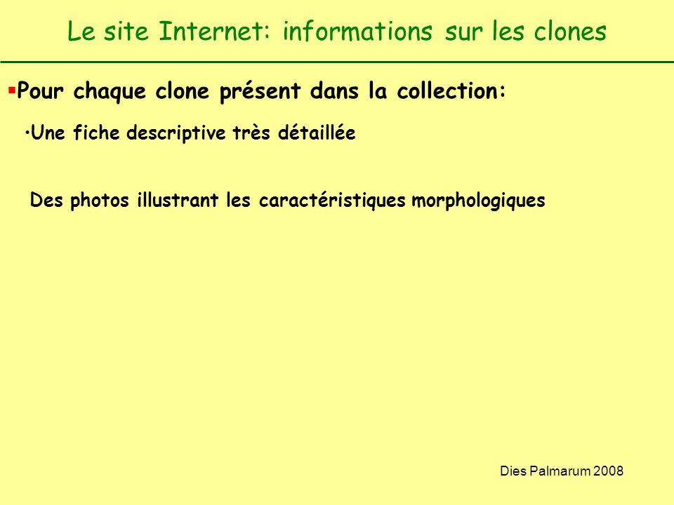 Dies Palmarum 2008 Le site Internet: informations sur les clones Pour chaque clone présent dans la collection: Une fiche descriptive très détaillée De