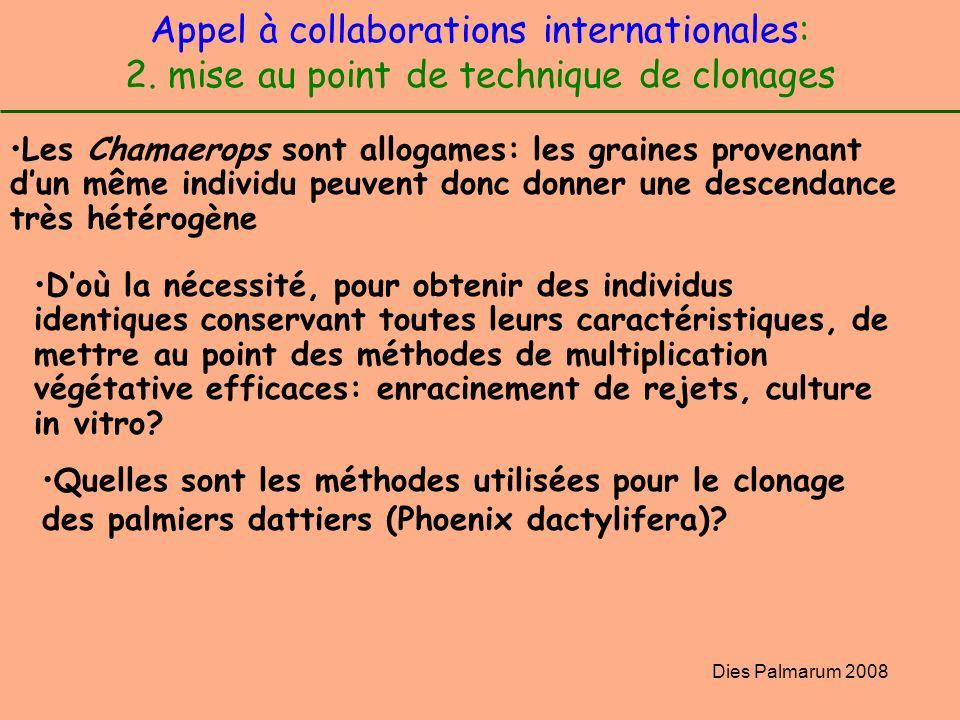Dies Palmarum 2008 Appel à collaborations internationales: 2. mise au point de technique de clonages Les Chamaerops sont allogames: les graines proven