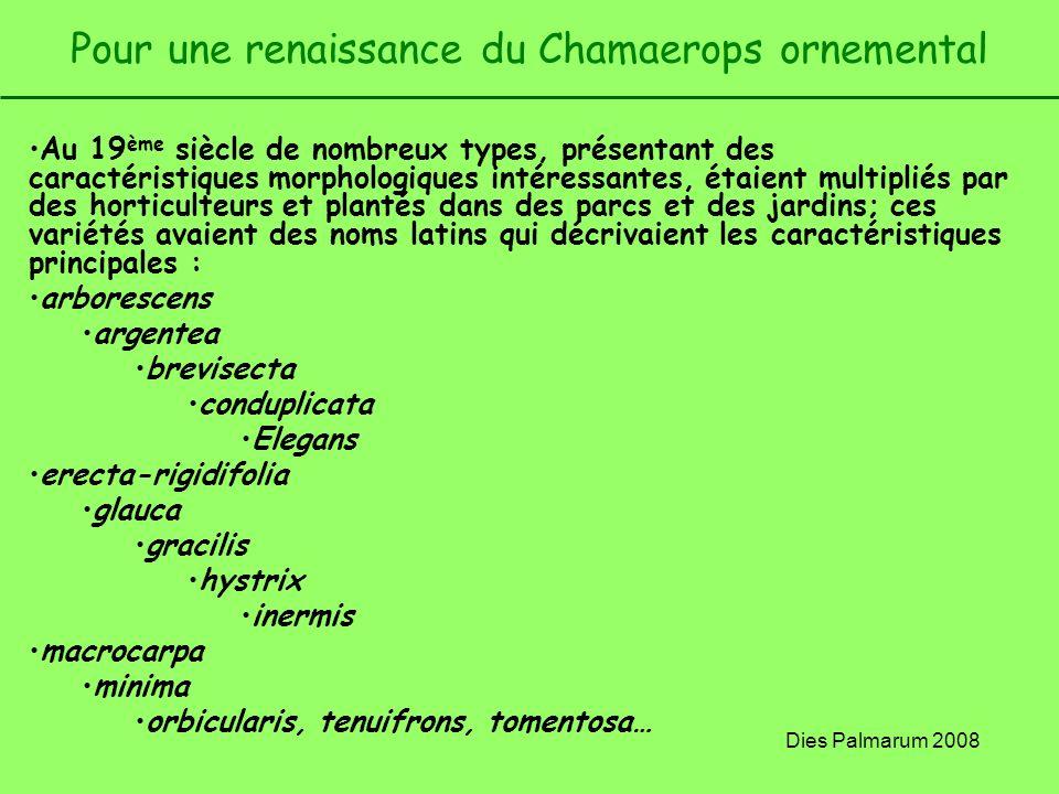 Dies Palmarum 2008 Pour une renaissance du Chamaerops ornemental Au 19 ème siècle de nombreux types, présentant des caractéristiques morphologiques in