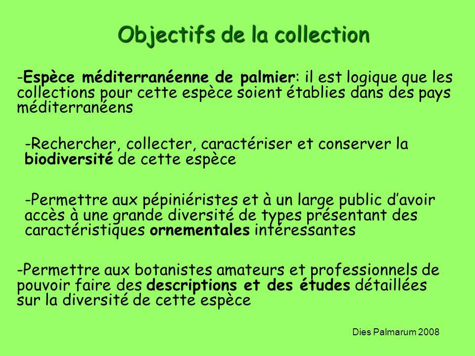 Dies Palmarum 2008 Objectifs de la collection -Espèce méditerranéenne de palmier: il est logique que les collections pour cette espèce soient établies