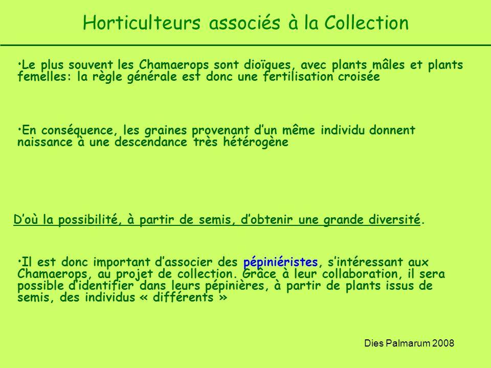 Dies Palmarum 2008 Horticulteurs associés à la Collection Le plus souvent les Chamaerops sont dioïques, avec plants mâles et plants femelles: la règle