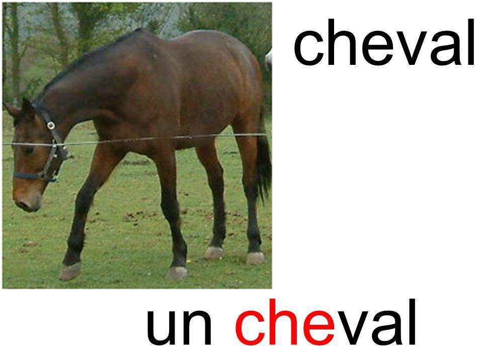 checheval un cheval