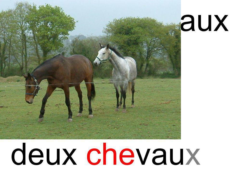 chechevaux deux chevaux