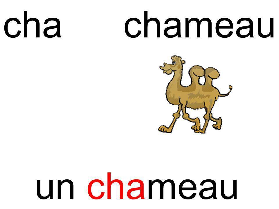 chachameau un chameau