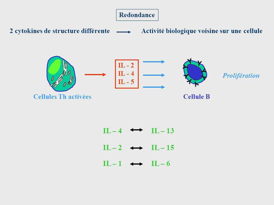 Redondance IL - 2 IL - 4 IL - 5 Cellules Th activées 2 cytokines de structure différenteActivité biologique voisine sur une cellule IL – 4IL – 13 IL –