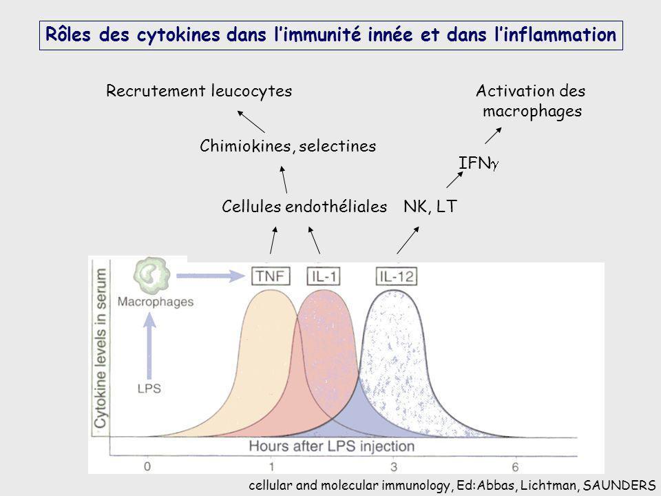 Rôles des cytokines dans limmunité innée et dans linflammation cellular and molecular immunology, Ed:Abbas, Lichtman, SAUNDERS Cellules endothéliales
