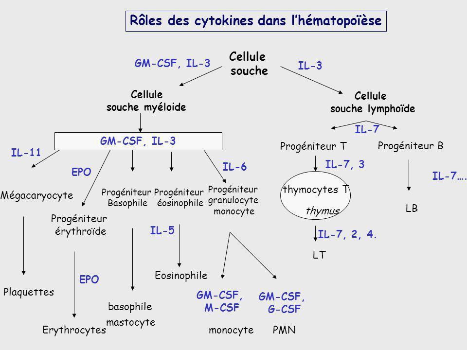 IL-7 IL-3 GM-CSF, IL-3 Cellule souche myéloide Cellule souche lymphoïde Cellule souche IL-7…. IL-7, 3 IL-7, 2, 4. Progéniteur T Progéniteur B LB LT th