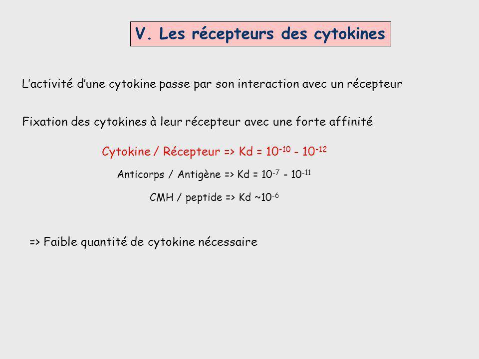 V. Les récepteurs des cytokines Lactivité dune cytokine passe par son interaction avec un récepteur Fixation des cytokines à leur récepteur avec une f