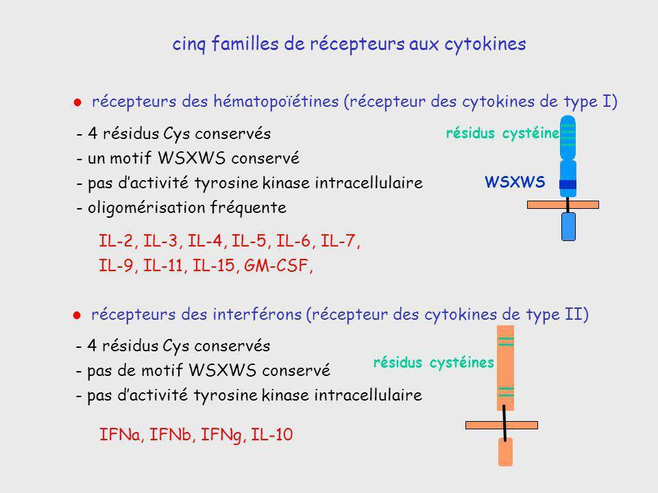 récepteurs des hématopoïétines (récepteur des cytokines de type I) récepteurs des interférons (récepteur des cytokines de type II) - 4 résidus Cys con