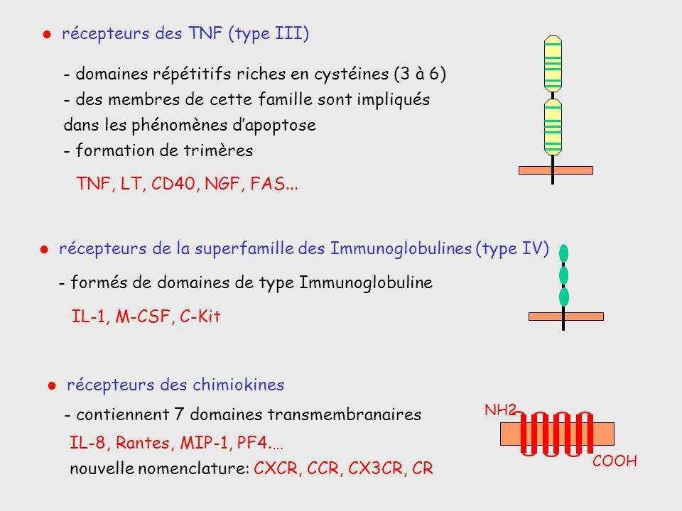récepteurs de la superfamille des Immunoglobulines (type IV) récepteurs des TNF (type III) récepteurs des chimiokines - formés de domaines de type Imm