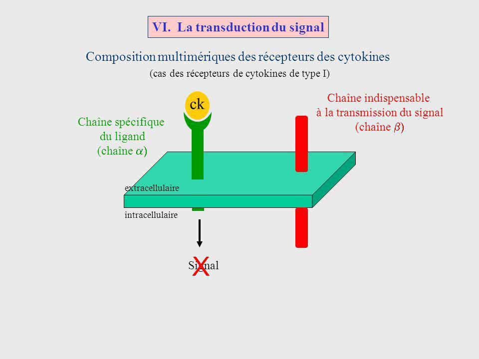 ck Chaîne spécifique du ligand (chaîne Chaîne indispensable à la transmission du signal (chaîne Composition multimériques des récepteurs des cytokines
