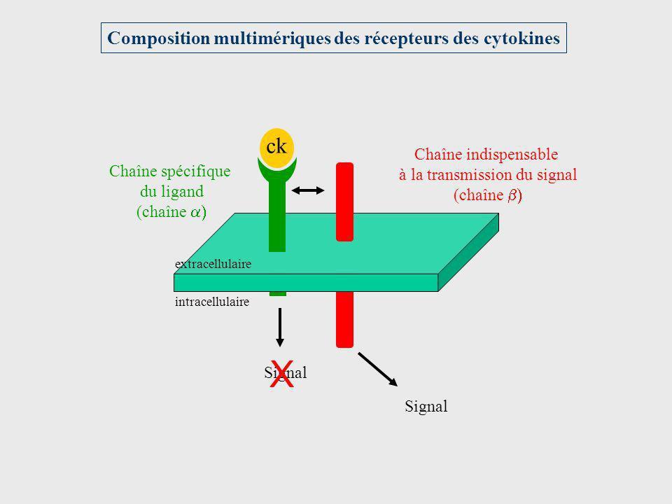ck Chaîne spécifique du ligand (chaîne Chaîne indispensable à la transmission du signal (chaîne Signal X intracellulaire extracellulaire Composition m
