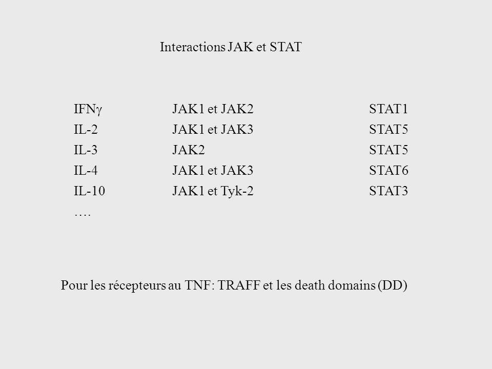 IFN JAK1 et JAK2STAT1 IL-2JAK1 et JAK3STAT5 IL-3JAK2STAT5 IL-4JAK1 et JAK3STAT6 IL-10JAK1 et Tyk-2STAT3 …. Interactions JAK et STAT Pour les récepteur
