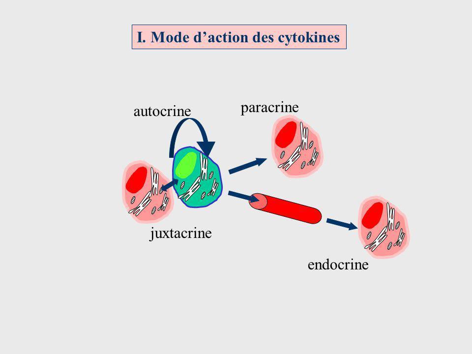 Redondance IL - 2 IL - 4 IL - 5 Cellules Th activées 2 cytokines de structure différenteActivité biologique voisine sur une cellule IL – 4IL – 13 IL – 2IL – 15 IL – 1IL – 6 Cellule B Y Y Y Y Y Y Y Y Prolifération